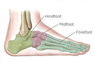 parts_of_a_foot